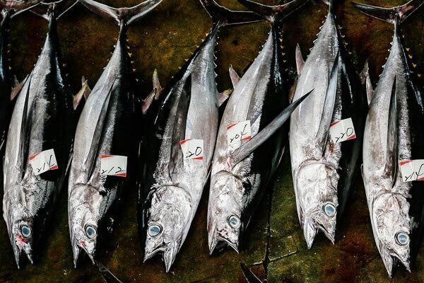 カテゴリータブ取扱い魚種一覧